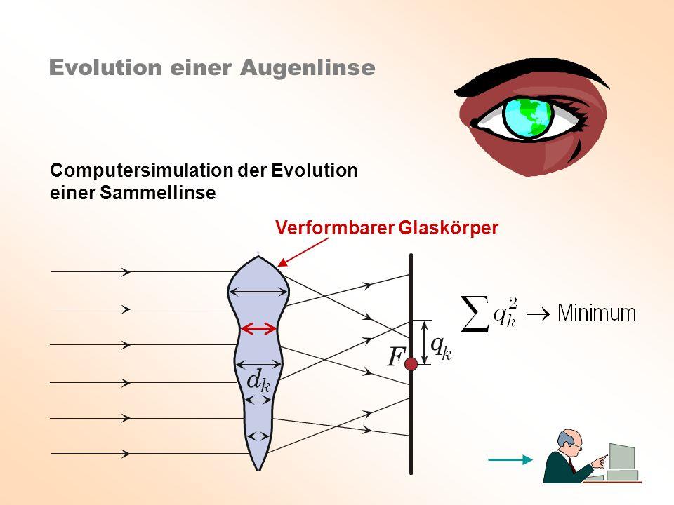 F d k q k Evolution einer Augenlinse Computersimulation der Evolution einer Sammellinse Verformbarer Glaskörper