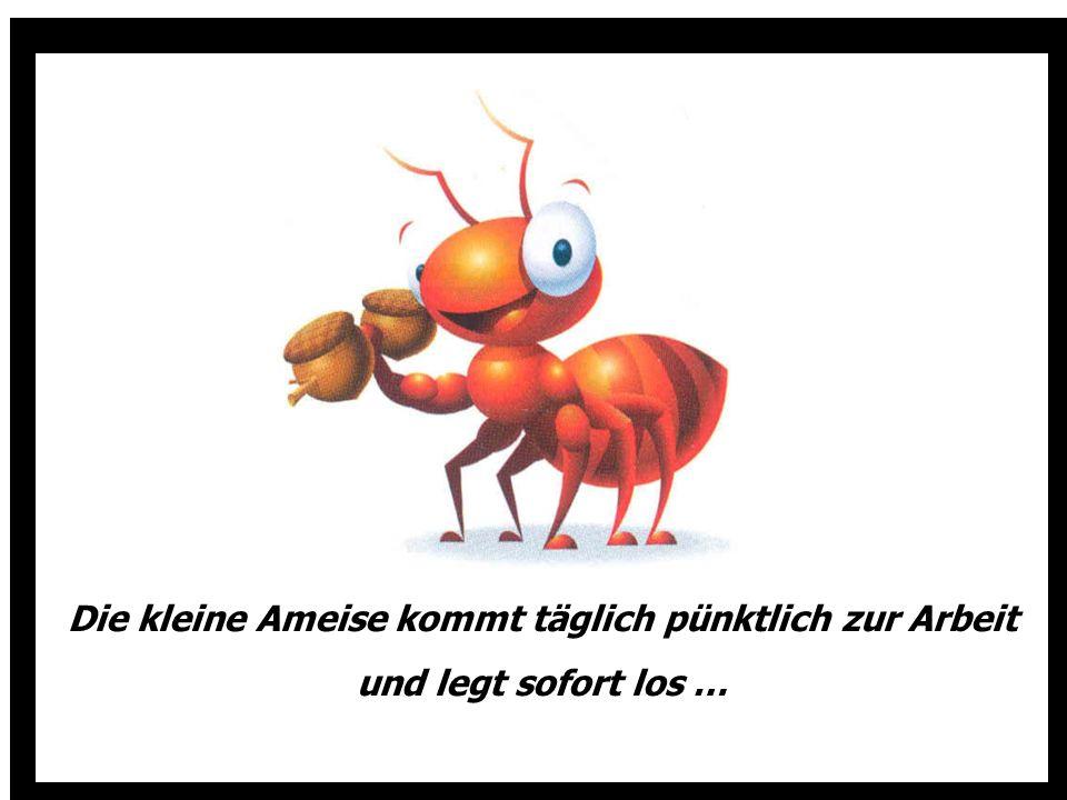Die kleine Ameise kommt täglich pünktlich zur Arbeit und legt sofort los …