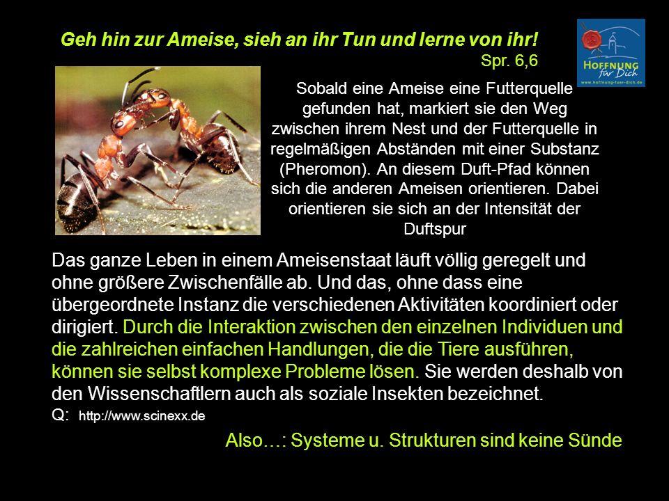 Sobald eine Ameise eine Futterquelle gefunden hat, markiert sie den Weg zwischen ihrem Nest und der Futterquelle in regelmäßigen Abständen mit einer Substanz (Pheromon).