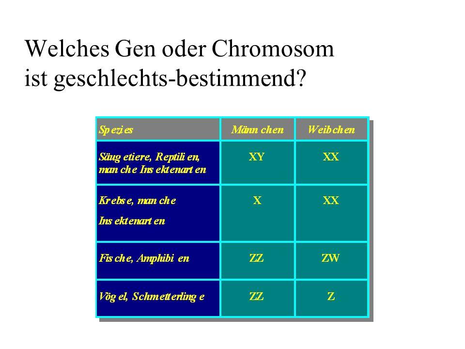 Welches Gen oder Chromosom ist geschlechts-bestimmend? KnippersT5-3