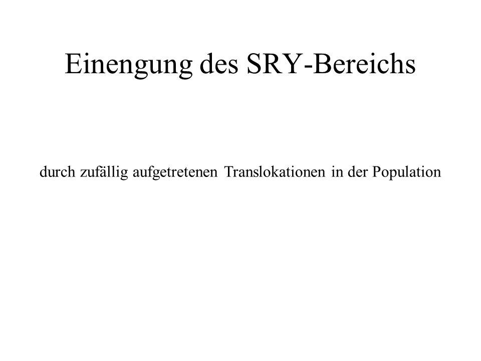 Einengung des SRY-Bereichs durch zufällig aufgetretenen Translokationen in der Population