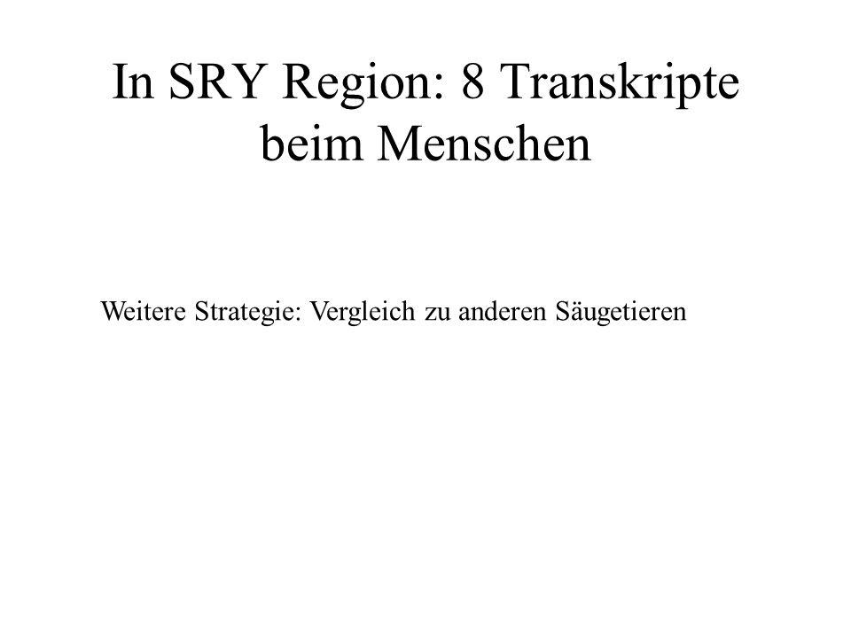 In SRY Region: 8 Transkripte beim Menschen Weitere Strategie: Vergleich zu anderen Säugetieren