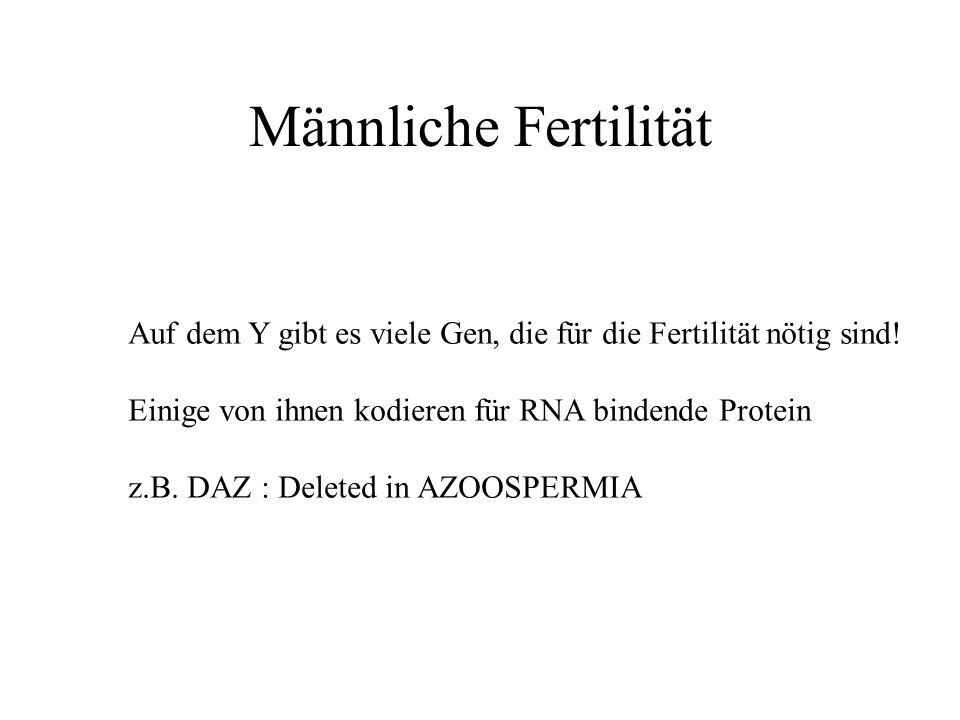 Männliche Fertilität Auf dem Y gibt es viele Gen, die für die Fertilität nötig sind! Einige von ihnen kodieren für RNA bindende Protein z.B. DAZ : Del