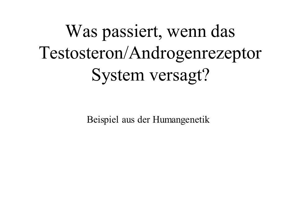Was passiert, wenn das Testosteron/Androgenrezeptor System versagt? Beispiel aus der Humangenetik