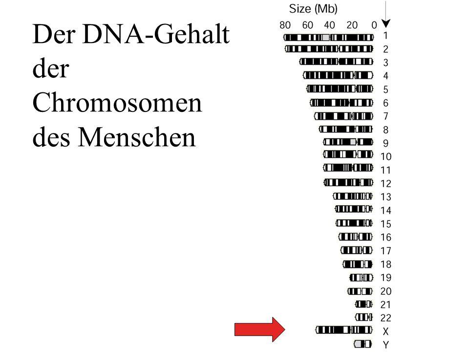 Der DNA-Gehalt der Chromosomen des Menschen Shoemaker Nature 409, 922Fig.4