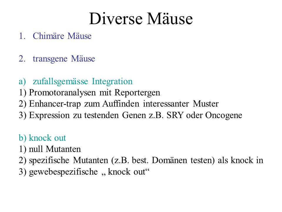 Diverse Mäuse 1.Chimäre Mäuse 2.transgene Mäuse a)zufallsgemässe Integration 1) Promotoranalysen mit Reportergen 2) Enhancer-trap zum Auffinden intere