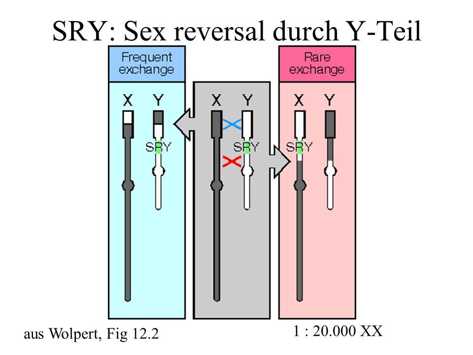 SRY: Sex reversal durch Y-Teil aus Wolpert, Fig 12.2 1 : 20.000 XX