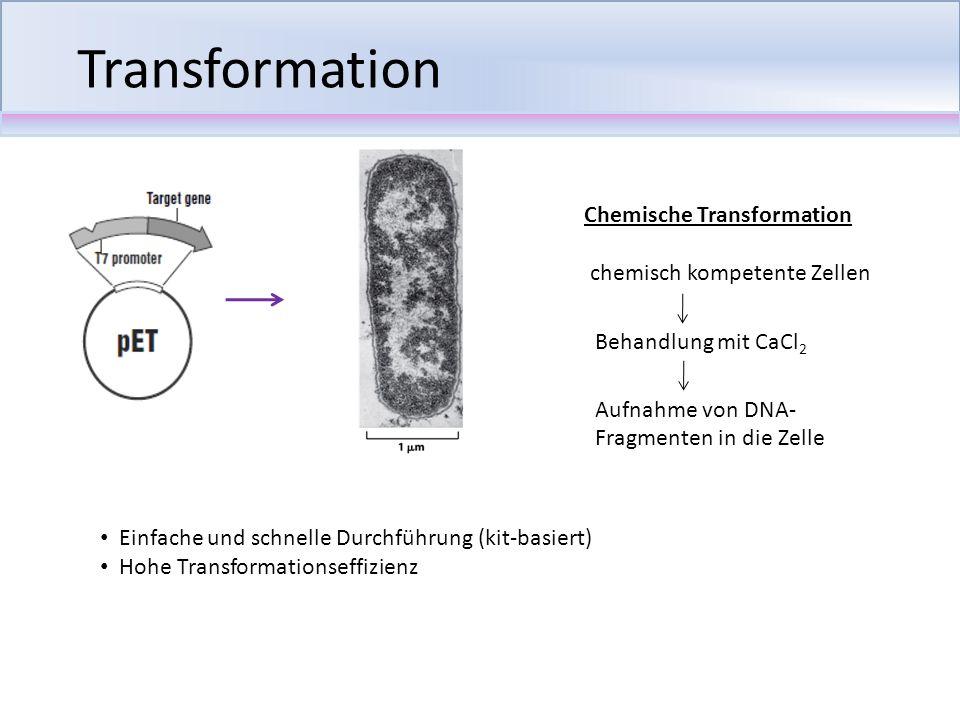 Transformation Einfache und schnelle Durchführung (kit-basiert) Hohe Transformationseffizienz Chemische Transformation chemisch kompetente Zellen Beha