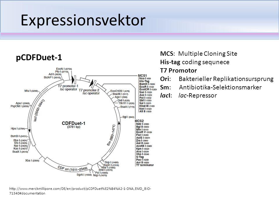 Expressionsvektor MCS: Multiple Cloning Site His-tag coding sequnece T7 Promotor Ori: Bakterieller Replikationsursprung Sm: Antibiotika-Selektionsmark