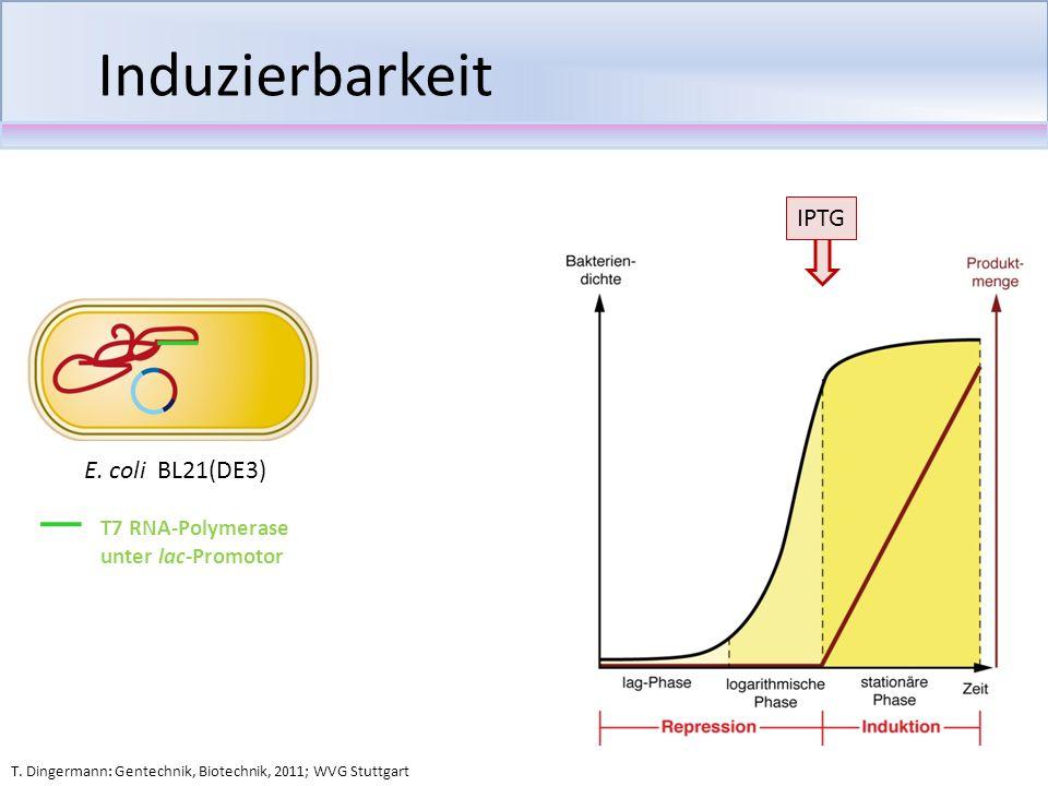 Induzierbarkeit IPTG T. Dingermann: Gentechnik, Biotechnik, 2011; WVG Stuttgart E. coli BL21(DE3) T7 RNA-Polymerase unter lac-Promotor