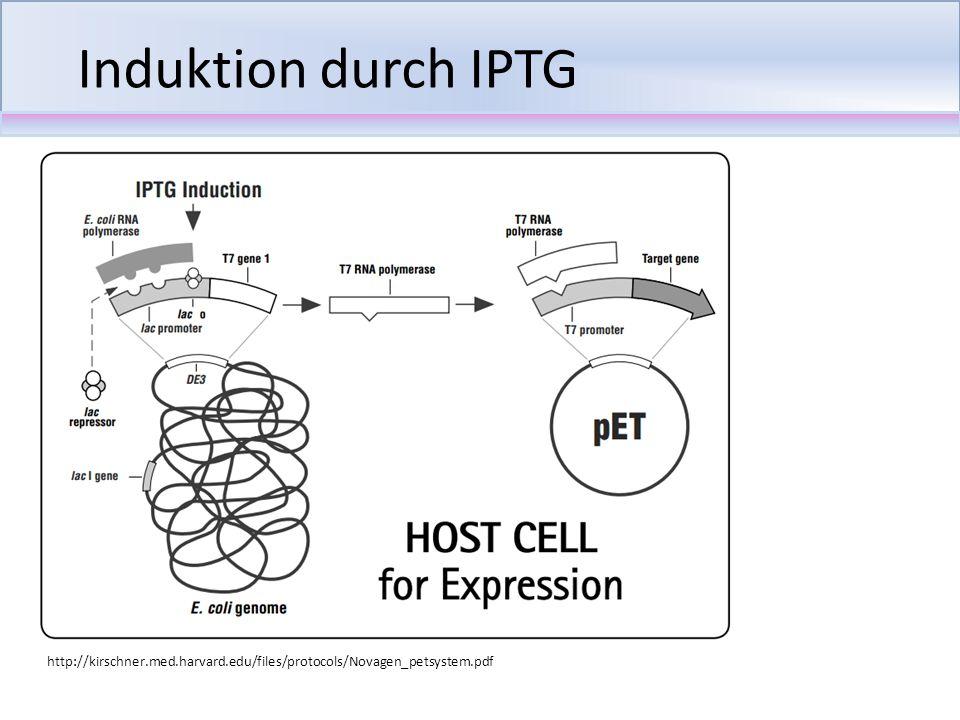 Klonierung (Restriktion, Ligation) Transformation in E.