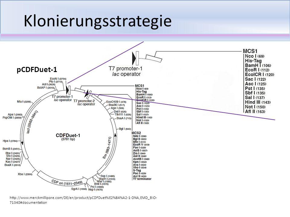 Transformation Einfache und schnelle Durchführung (kit-basiert) Hohe Transformationseffizienz Chemische Transformation chemisch kompetente Zellen Behandlung mit CaCl 2 Aufnahme von DNA- Fragmenten in die Zelle
