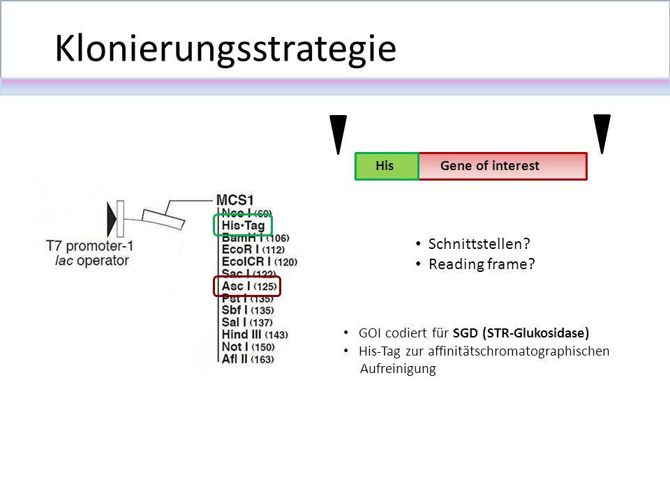 Schnittstellen? Reading frame? Klonierungsstrategie Gene of interestHis GOI codiert für SGD (STR-Glukosidase) His-Tag zur affinitätschromatographische