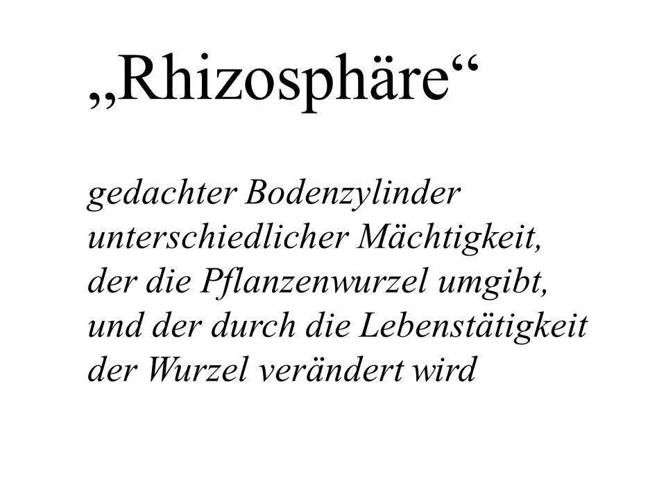 """""""Rhizosphäre gedachter Bodenzylinder unterschiedlicher Mächtigkeit, der die Pflanzenwurzel umgibt, und der durch die Lebenstätigkeit der Wurzel verändert wird"""
