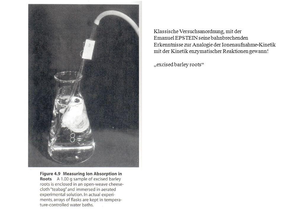 Klassische Versuchsanordnung, mit der Emanuel EPSTEIN seíne bahnbrechenden Erkenntnisse zur Analogie der Ionenaufnahme-Kinetik mit der Kinetik enzymatischer Reaktionen gewann.