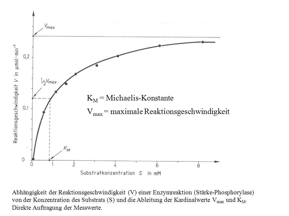 Abhängigkeit der Reaktionsgeschwindigkeit (V) einer Enzymreaktion (Stärke-Phosphorylase) von der Konzentration des Substrats (S) und die Ableitung der