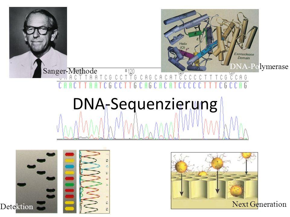 DNA-Sequenzierung Sanger-Methode DNA-Polymerase Next Generation Detektion