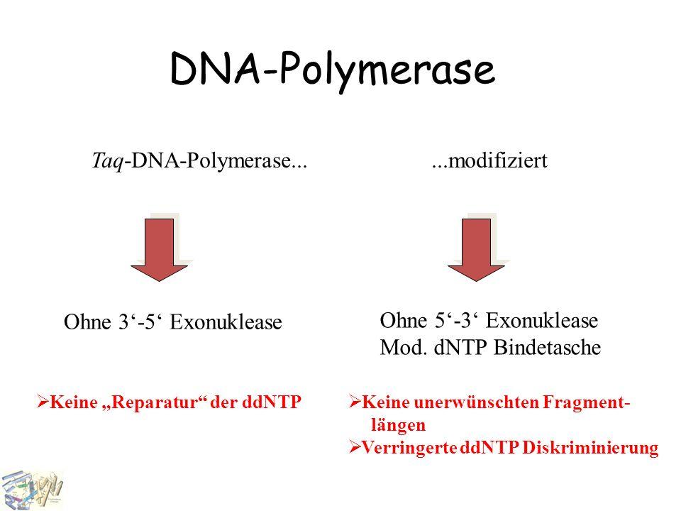 """DNA-Polymerase Taq-DNA-Polymerase......modifiziert Ohne 3'-5' Exonuklease Ohne 5'-3' Exonuklease Mod. dNTP Bindetasche  Keine """"Reparatur"""" der ddNTP """
