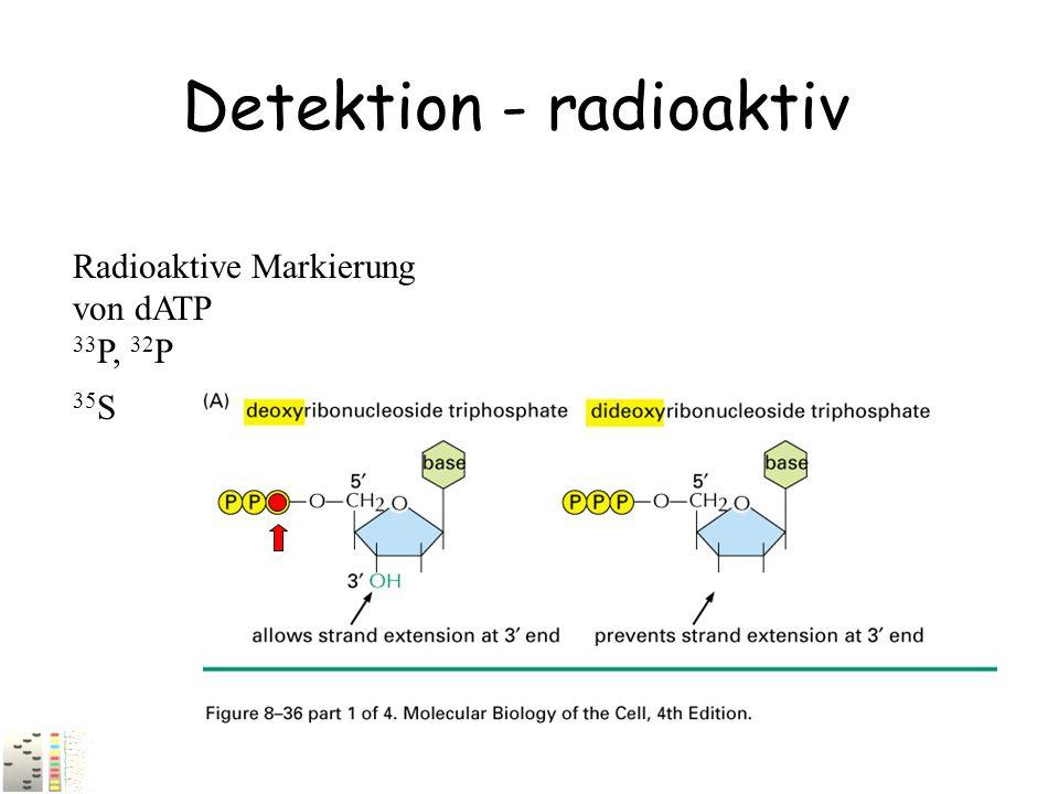 Detektion - radioaktiv Radioaktive Markierung von dATP 33 P, 32 P 35 S
