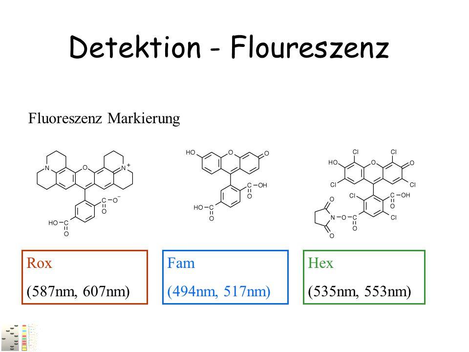 Detektion - Floureszenz Fluoreszenz Markierung Fam (494nm, 517nm) Hex (535nm, 553nm) Rox (587nm, 607nm)
