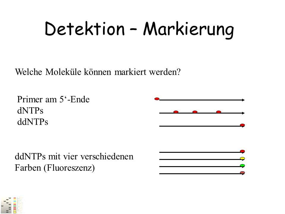 Detektion – Markierung Welche Moleküle können markiert werden? ddNTPs mit vier verschiedenen Farben (Fluoreszenz) Primer am 5'-Ende dNTPs ddNTPs