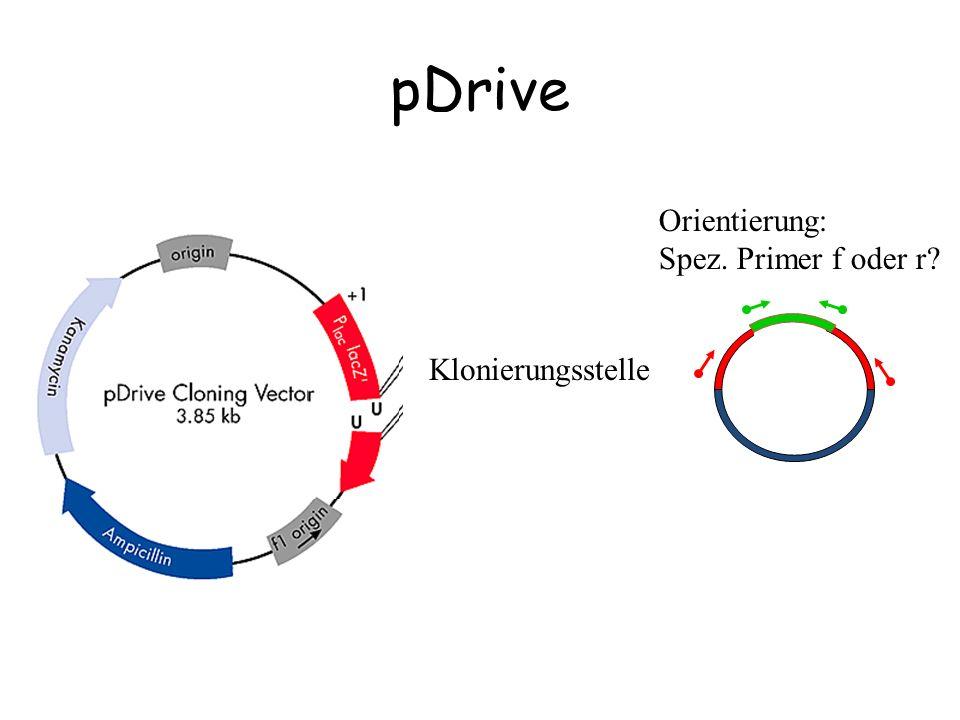 pDrive Klonierungsstelle Orientierung: Spez. Primer f oder r?