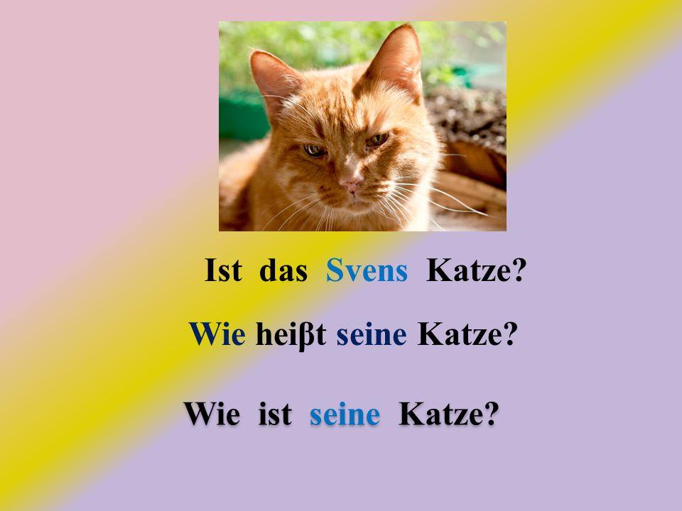 Ist das Svens Katze? Wie heiβt seine Katze? Wie ist seine Katze?