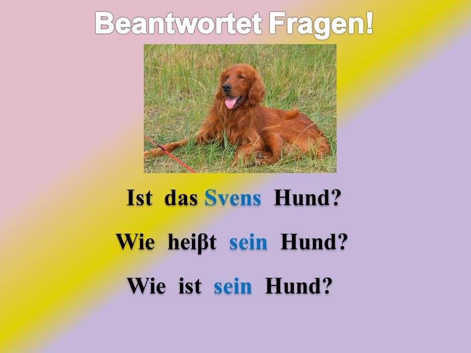 Ist das Svens Hund? Wie heiβt sein Hund? Wie ist sein Hund?