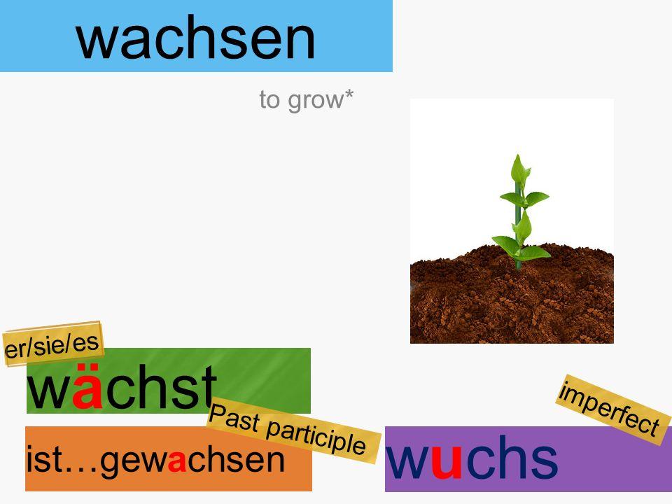 wachsen wächst ist…gewachsen to grow* er/sie/es Past participle wuchs imperfect