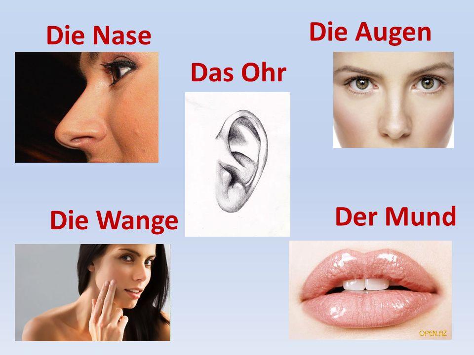 Die Nase Das Ohr Die Augen Der Mund Die Wange