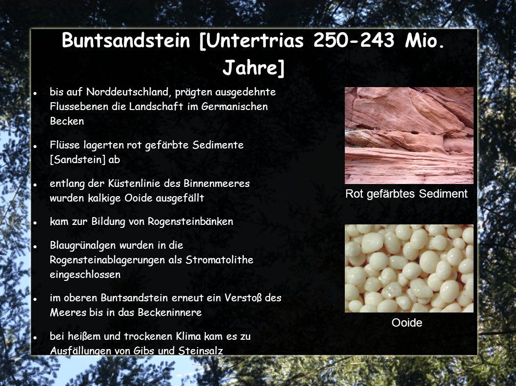 Buntsandstein [Untertrias 250-243 Mio.