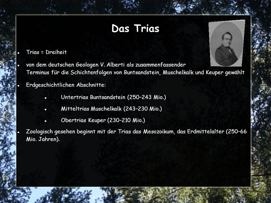 Muschelkalk [Mitteltrias 243–230 Mio.Jahre] im unteren Muschelkalk drang das Tethysmeer von Süden her in das Germanische Becken im warmen Flachwassermeer lagerten sich Mergelkalke im Wechsel mit Muschelresten ab im mittleren Muschelkalk die Verbindung zum Tethysmeer wurde immer enger, zum Schluss ganz unterbrochen kam zu ausfällen von Dolomit, Anhydrit und Steinsalz später öffnete sich wieder die Verbindung zwischen Germanische Becken und Tethys fossilreiche Kalke im Wechsel mit Tonschieferlagen abgelagert weltweite Bildung von Geosynklinalen Vulkanismus große Gebiete mit Plateaubasalten bedeckt