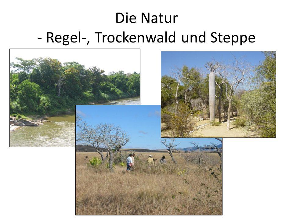Die Natur - Regel-, Trockenwald und Steppe