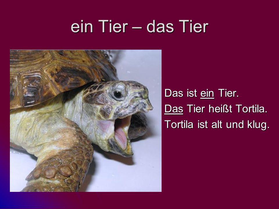 ein Tier – das Tier Das ist ein Tier. Das Tier heißt Tortila. Tortila ist alt und klug.