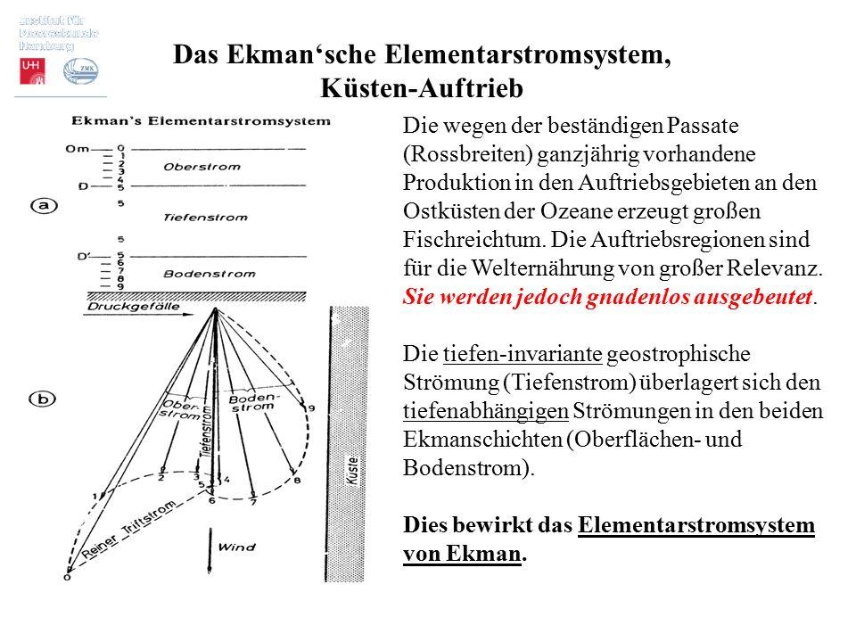 Das Ekman'sche Elementarstromsystem, Küsten-Auftrieb Die wegen der beständigen Passate (Rossbreiten) ganzjährig vorhandene Produktion in den Auftriebs