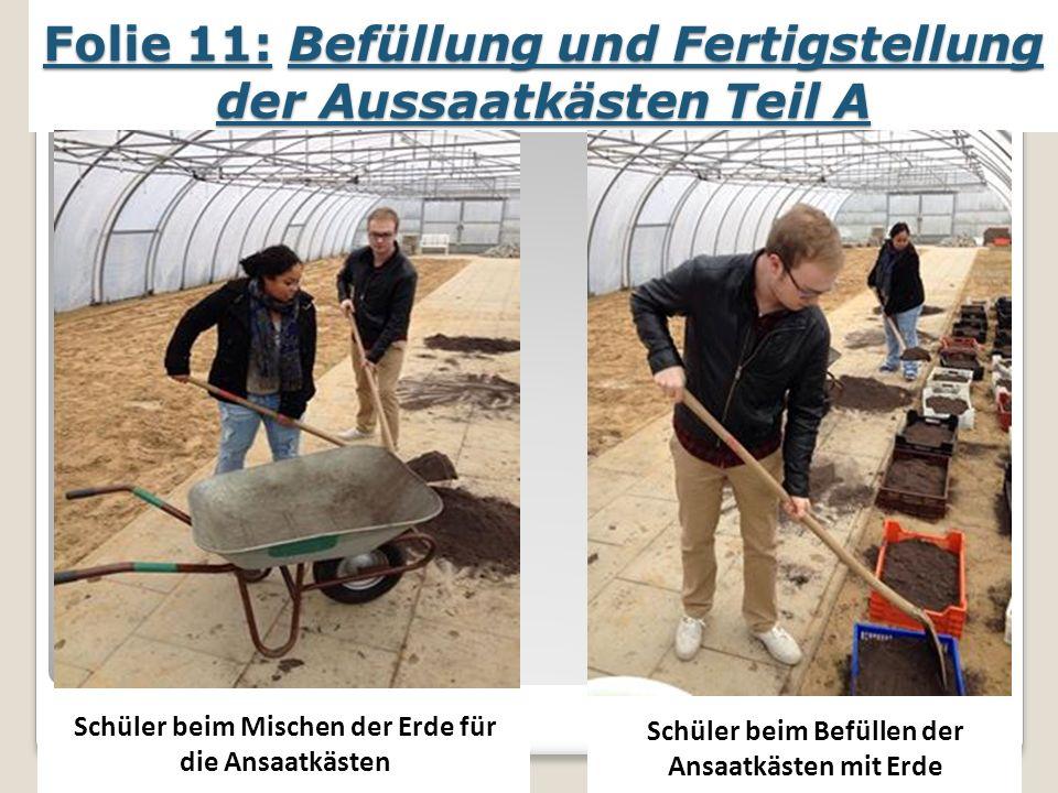 Folie 11: Befüllung und Fertigstellung der Aussaatkästen Teil A Schüler beim Mischen der Erde für die Ansaatkästen Schüler beim Befüllen der Ansaatkästen mit Erde