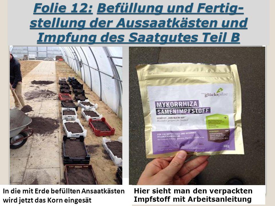 Folie 12: Befüllung und Fertig- stellung der Aussaatkästen und Impfung des Saatgutes Teil B In die mit Erde befüllten Ansaatkästen wird jetzt das Korn eingesät Hier sieht man den verpackten Impfstoff mit Arbeitsanleitung