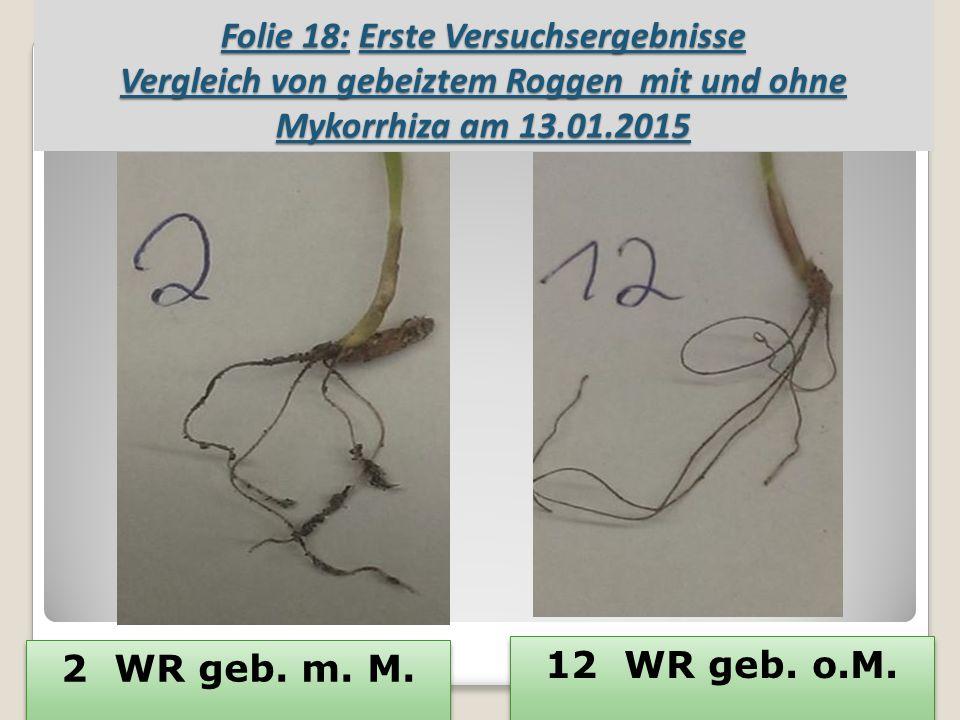 Folie 18: Erste Versuchsergebnisse Vergleich von gebeiztem Roggen mit und ohne Mykorrhiza am 13.01.2015 2 WR geb.