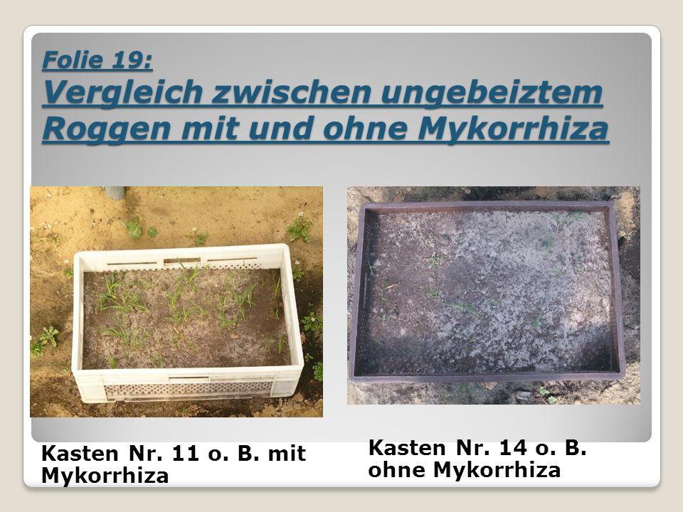 Folie 19: Vergleich zwischen ungebeiztem Roggen mit und ohne Mykorrhiza Kasten Nr.