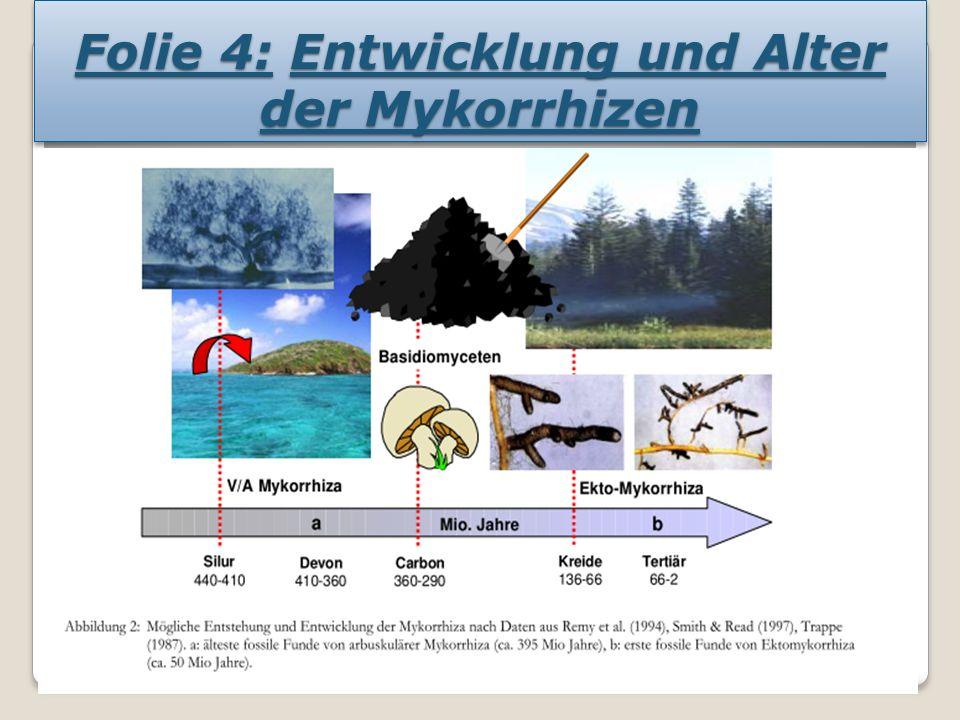 Folie 5: Anpassung der Mykorrhiza an Landschaft und Kulturpflanzen In dieser Landschaft sind mindestens drei verschiedene Mykorrhizatypen vertreten: Die Arbuskuläre Mykorrhiza bei den Gräsern im Vordergrund, die Ektomykorrhiza bei den verschiedenen Bäumen und die Ericoide Mykorrhiza bei verschiedenen Ericaceen (z.B.