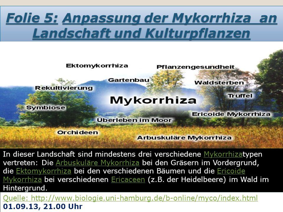Folie 6: In welche Haupt-Mykorrhiza- Typen unterscheiden wir?