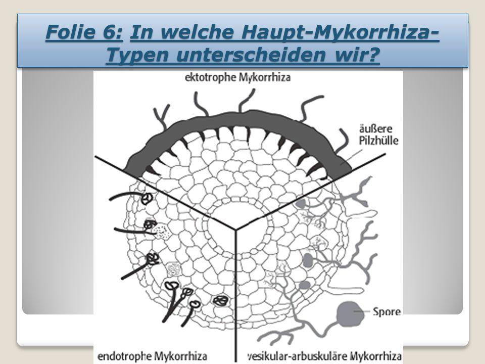 Folie 6: In welche Haupt-Mykorrhiza- Typen unterscheiden wir