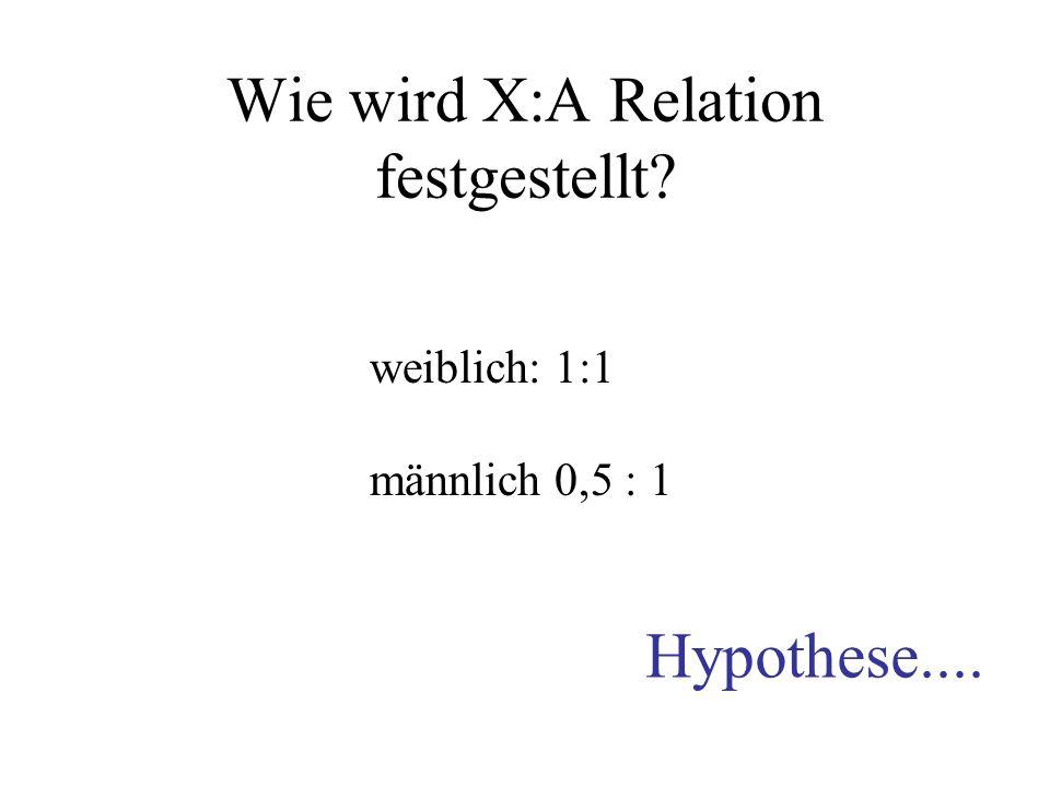 Wie wird X:A Relation festgestellt? weiblich: 1:1 männlich 0,5 : 1 Hypothese....