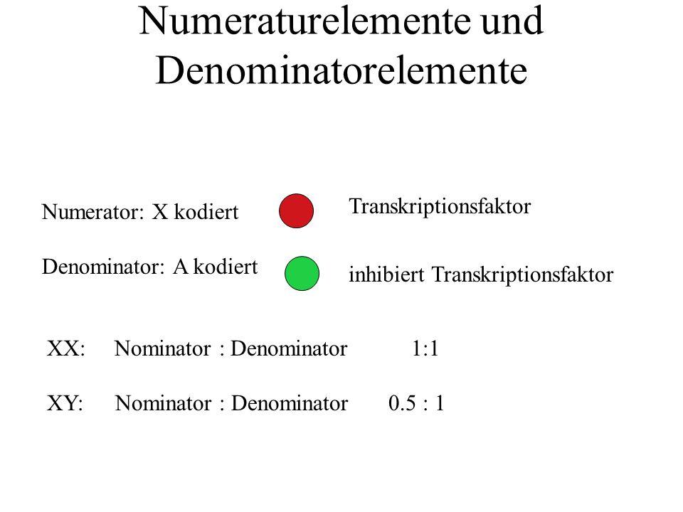 Numeraturelemente und Denominatorelemente Numerator: X kodiert Denominator: A kodiert XX: Nominator : Denominator 1:1 XY:Nominator : Denominator0.5 : 1 Transkriptionsfaktor inhibiert Transkriptionsfaktor