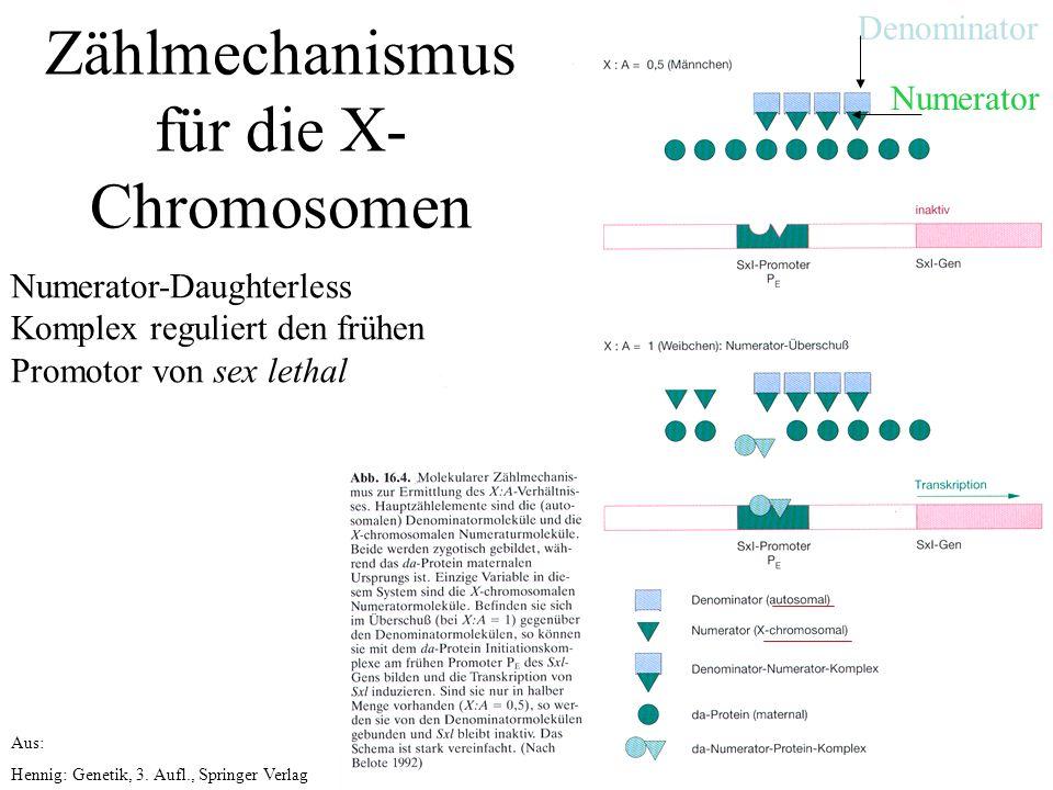 Aus: Hennig: Genetik, 3.