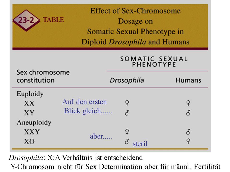 Geschlechtsbestimmung: Drosophila/Säuger Genetic Analysis7T23-02 Drosophila: X:A Verhältnis ist entscheidend Y-Chromosom nicht für Sex Determination aber für männl.
