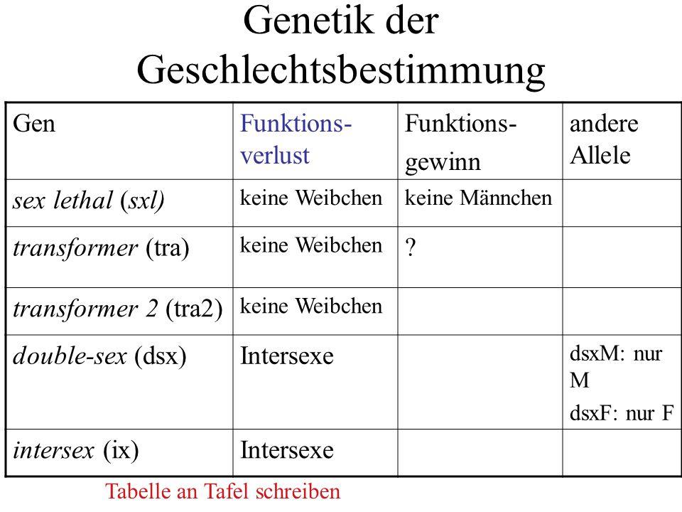 Genetik der Geschlechtsbestimmung GenFunktions- verlust Funktions- gewinn andere Allele sex lethal (sxl) keine Weibchenkeine Männchen transformer (tra) keine Weibchen .