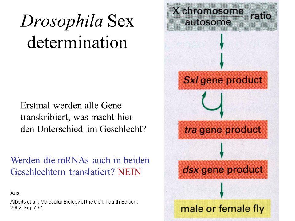 Dosiskompensation a)Drosophila b)Mensch/Säugetier
