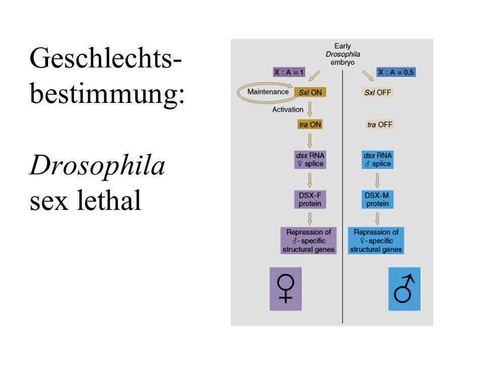 Genkaskade der Geschlechts- bestimmung von Drosophila (TAFEL)