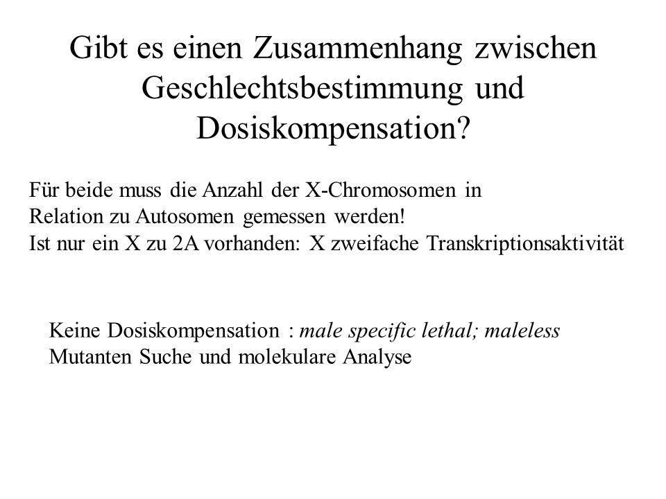 Gibt es einen Zusammenhang zwischen Geschlechtsbestimmung und Dosiskompensation.